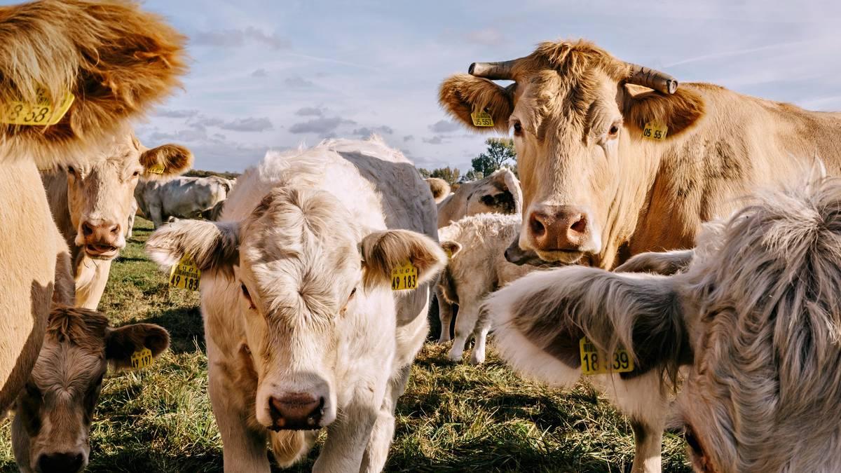 Die Wahrheit über Fleisch – und wie man es ersetzen kann