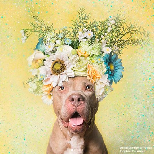 Flower Power: wie ein Fotograf hilft dieser Rasse Holen Sie sich verabschiedet