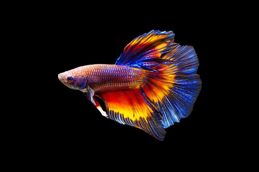 Die Fakten über Fische depression