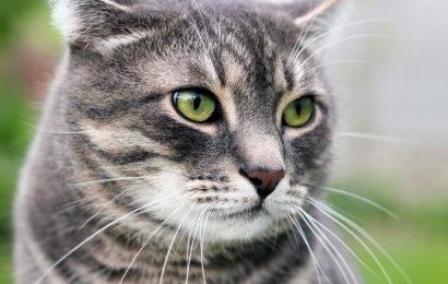 Risikofaktor Haustier: Junge Frau landet nach einmaligem Streicheln einer Katze im Rollstuhl