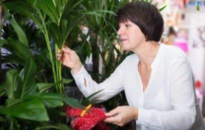 Natürlicher Infektionsschutz: Vor Erkältungs- und Grippeviren schützen auch Zimmerpflanzen
