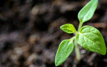Pflanzliche Antioxidantien werden immer wichtiger