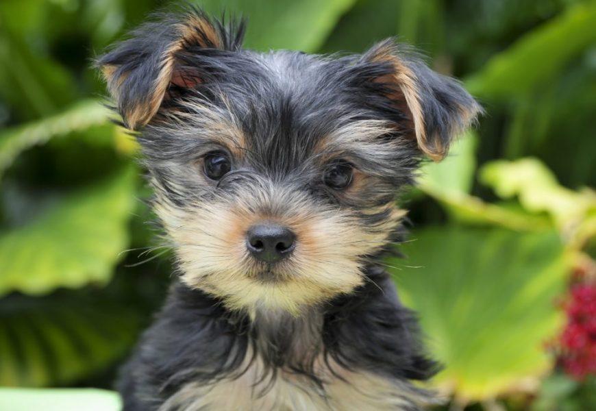 Vergiftungsrisiko: Weltweiter Hundefutter Rückruf: Die ersten Hunde-Todesfälle wurden bereits gemeldet