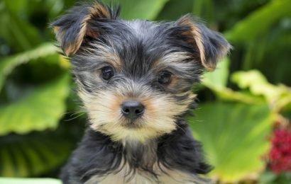Weltweiter Hundefutter-Rückruf – Erste Todesfälle von Hunden wegen Vitamin-Vergiftung