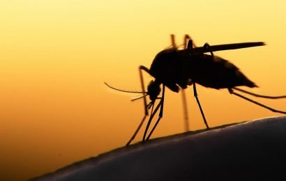 Neuer Impfstoff gegen malaria könnte effektiver sein