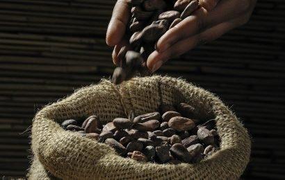 Kakao kann helfen Bordstein Müdigkeit in der Regel im Zusammenhang mit multipler Sklerose