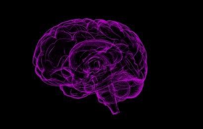 Beweise gefunden der Neurogenese bei Menschen bis zum Alter 87