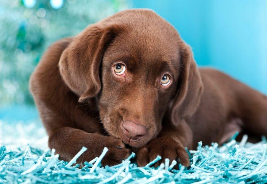 Erweiterter Hundefutter-Rückruf: Mehrere Tiere sind gestorben