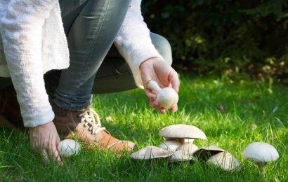 Entdeckt: Pilze helfen dem Gedächtnis auf die Sprünge