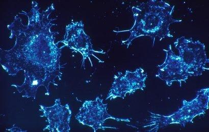 Wie 'sleeper cell' Krebs-Stammzellen, die beibehalten werden, chronische myeloische Leukämie