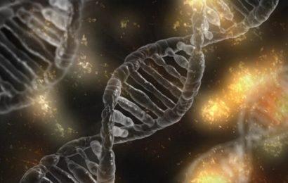Chinesische Forscher hinzufügen menschliche Gehirn im Zusammenhang mit gen-Affen-Genom in umstrittenen experiment