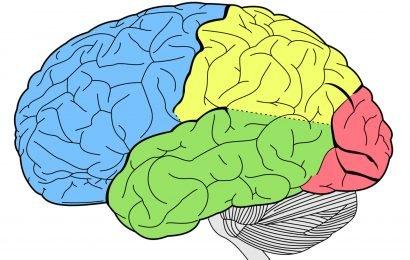Neue brain tumor imaging-Technik nutzt protein in scorpion venom
