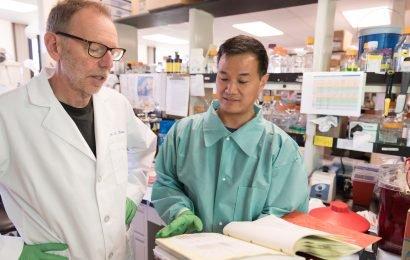 Durchbruch in der chronic wasting disease Forschung zeigt, verschiedene Hirsche, Elche prion-Stämme
