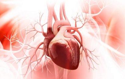 Herz-Motor entschlüsselt: Bisher nicht bekannte Mini-Eiweiße sind Treibstoff für das Herz