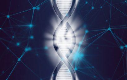 Von hundertjährigen' genetischen code, eine potenzielle neue Therapie gegen Herz-Kreislauf-Erkrankungen
