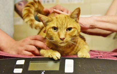 Eine ASPCA Fonds Wirkt Wunder für einen Besonderen Tabby