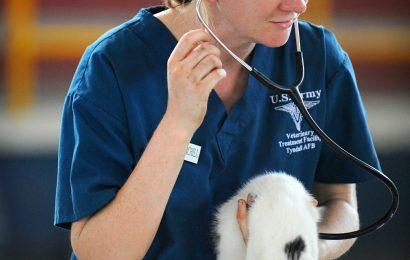 Bei der Arbeit mit Tieren weh tun können, Ihre psychische Gesundheit