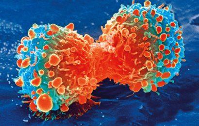 Neue Studie hilft, zu verstehen, die menschlichen Abwehrmechanismen und die Ausbreitung von Krebs