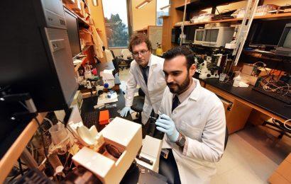 Neues Ziel gefunden für eine Erkrankung des Herzens, die kleinsten Blutgefäße