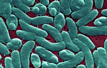 Frau stirbt durch Bakterien-Infektion: Wie gefährlich ist ein Bad in der Ostsee?