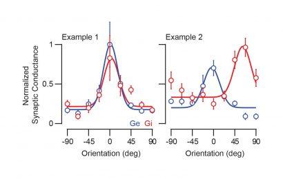 Innovative Technik für die Kennzeichnung und Kartierung von inhibitorischen Neuronen zeigen unterschiedliche tuning-profile