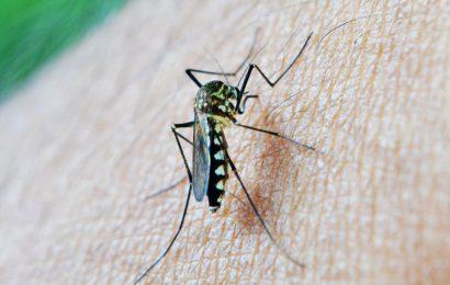 Malaria kann und sollte ausgerottet werden, innerhalb einer generation, erklären, global-health-Experten
