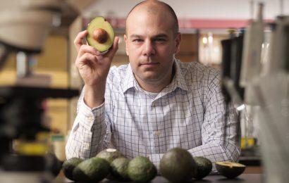 Avocados können helfen, zu verwalten, Adipositas, diabetes verhindern