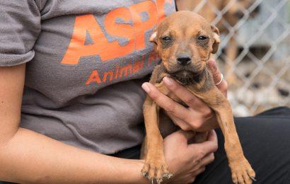 Justiz Serviert: der Fall ist abgeschlossen für Über 40 Dogfighting-Opfer