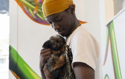 Neue ASPCA Gemeinschaftlichen Veterinär-Center Öffnet in Florida