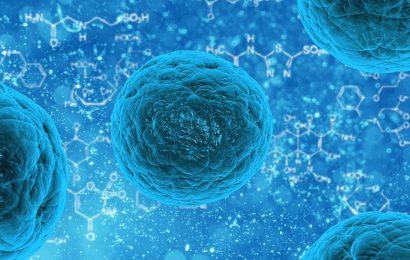 Forscher finden mögliche neue Ziel für die Behandlung von entzündlichen Erkrankungen