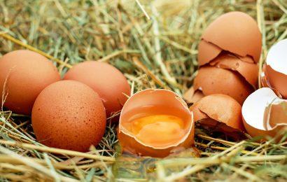 Eine in vier australischen Erwachsenen Lebensmittelsicherheit, Risiko, Essen rohe Eier