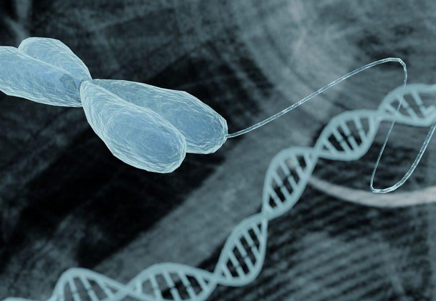 """""""Springende Gene"""" zur Stabilisierung der DNA-Faltung"""