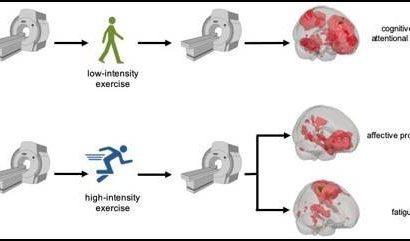 Hohe und niedrige Intensität übung gefunden, um Einfluss auf die Funktion des Gehirns anders