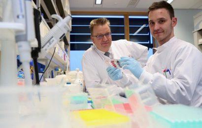 """Entdeckung von neuen T-Zell wirft die Aussicht auf eine """"universal"""" Krebs-Therapie"""