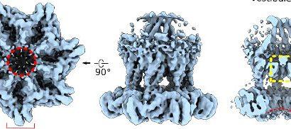 Rezeptoren unter dem Strom: Mechanosensitive GPCRs