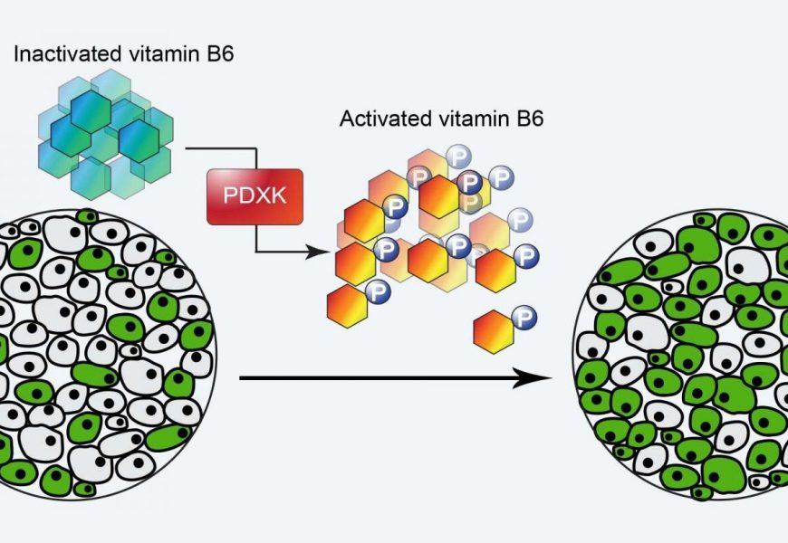 Vitamin B6, Leukämie, tödliche sucht