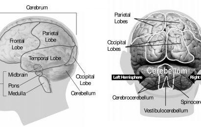 Neue Medikamente am Horizont für Schlaganfall und hydrocephalus