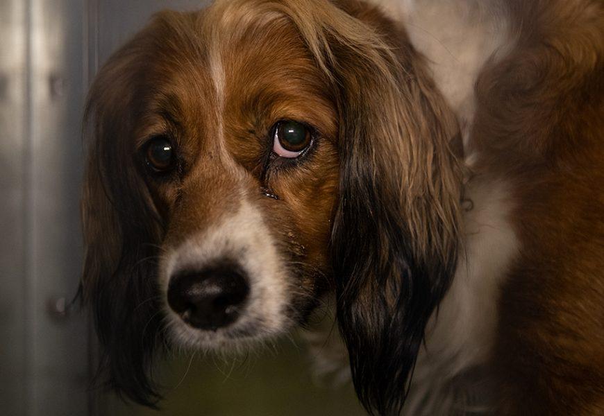 Erholung Beginnt für 29 Kapitulierte Hunde