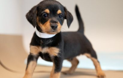 Richter Bestätigt, Maryland Pet-Verkaufs-Verbot