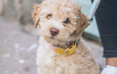 Coronavirus Update von Fetch! Pet Care (3/17/20) Zu Holen! Pet Care