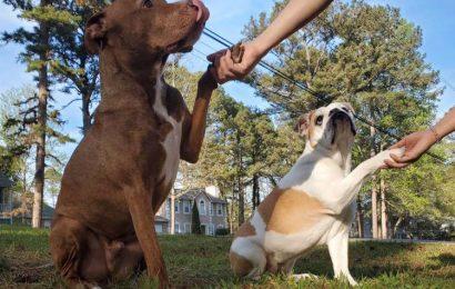 Heben einer Pfote, Um Haustiere zu Holen! Pet Care