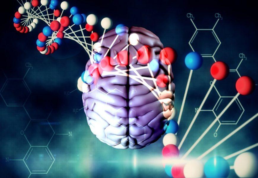 Überraschend viele eigentümliche langen introns im Gehirn Gene