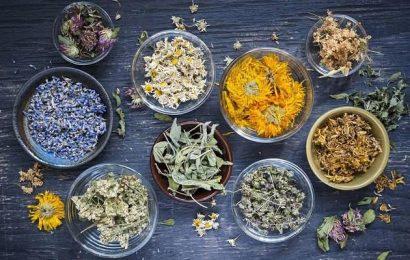 Wohltuende Wirkung: Die besten Kräuter gegen Magenschmerzen