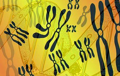 Genetische tests unterscheiden sich in Ihrer interpretation von bestimmten Varianten