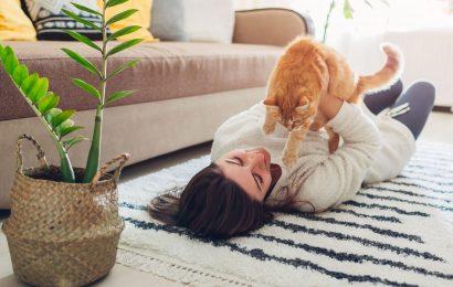 Katzen-Kratzer richtig versorgen
