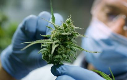 Cannabis gegen Darmentzündungen und zur Darmkrebsvorbeugung? – Naturheilkunde & Naturheilverfahren Fachportal