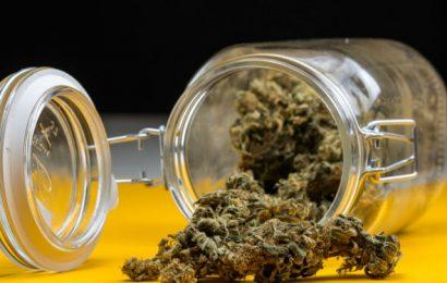 Löst regelmäßiger Konsum von Cannabis Hyperalgesie aus? – Naturheilkunde & Naturheilverfahren Fachportal